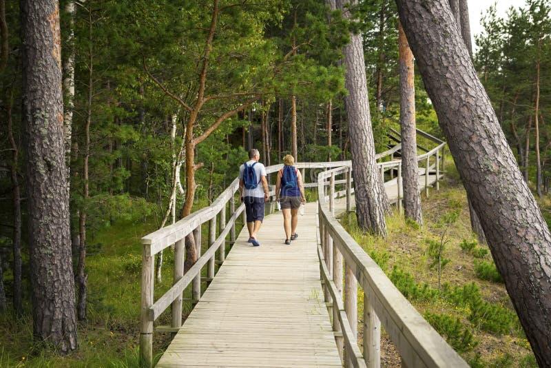 Ξύλινη γέφυρα στο ξύλο με τις γέφυρες παρατήρησης στοκ φωτογραφία