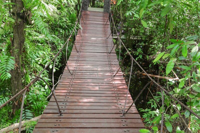Ξύλινη διάβαση πεζών γεφυρών αναστολής στο δάσος στοκ εικόνα με δικαίωμα ελεύθερης χρήσης