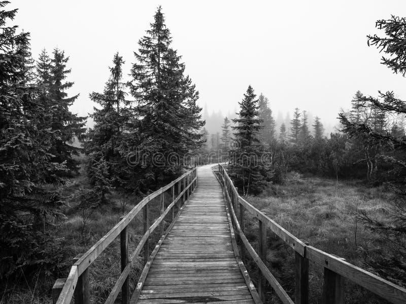 Ξύλινη πορεία στο έλος τύρφης στοκ φωτογραφία
