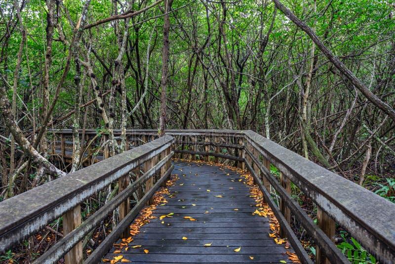 Ξύλινος θαλάσσιος περίπατος στη Φλώριδα Everglades στοκ εικόνες