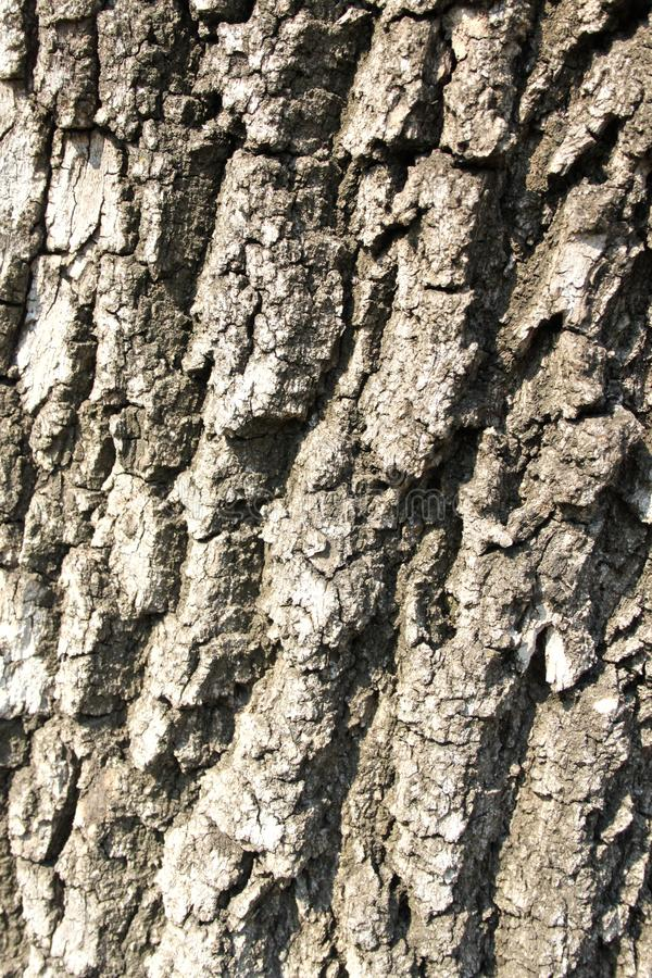 Ξύλινος καφετής γκρίζος φλοιός σχεδίων δέντρων σύστασης στοκ φωτογραφίες