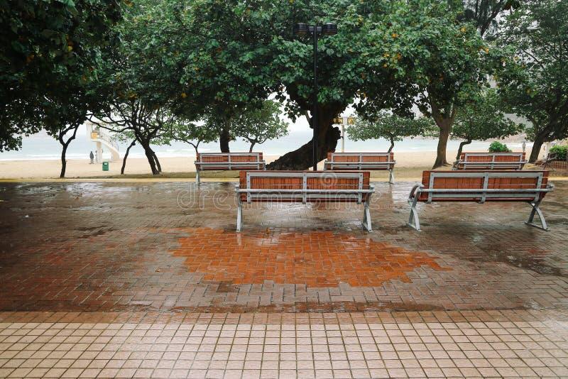 Ξύλινος πάγκος κάτω από το δέντρο στη βροχερή ημέρα στην παραλία Shek ο στοκ εικόνες