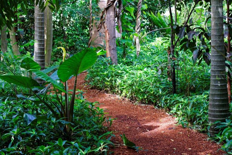 Ξύλινος-πελεκημένη πορεία μέσω του τροπικού τροπικού δάσους στοκ φωτογραφίες με δικαίωμα ελεύθερης χρήσης