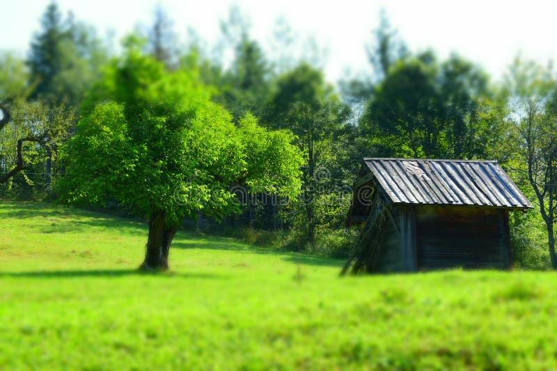 Ξύλινο υπόστεγο σε έναν πράσινο τομέα στοκ φωτογραφία