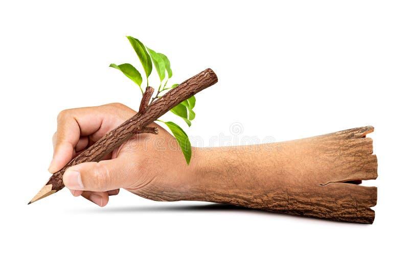 Ξύλινο χέρι που κρατά το φυσικό μολύβι στοκ φωτογραφίες με δικαίωμα ελεύθερης χρήσης