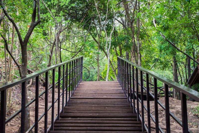 Ξύλο διάβασης πεζών γεφυρών στο δάσος στοκ φωτογραφίες με δικαίωμα ελεύθερης χρήσης