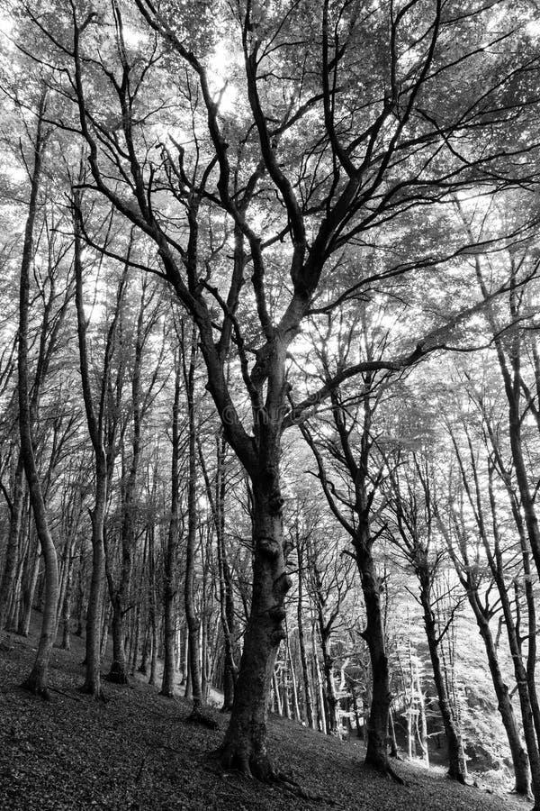 Ξύλο και δέντρο στοκ εικόνες με δικαίωμα ελεύθερης χρήσης