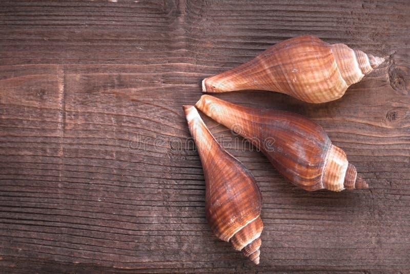 Ξύλο και θάλασσα Shell στοκ φωτογραφία