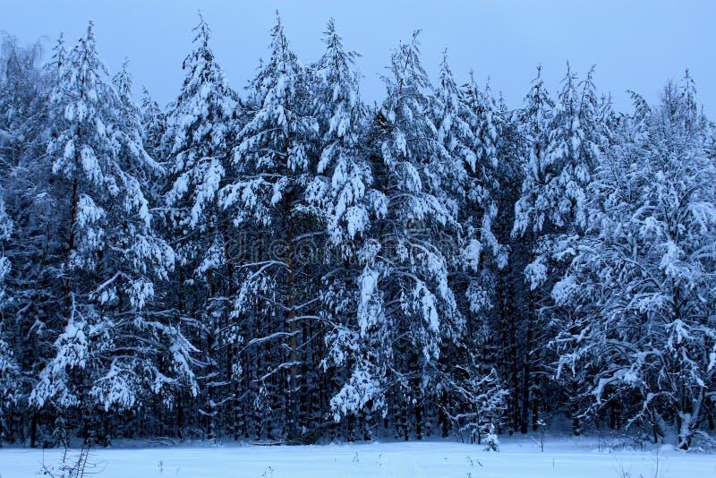 Ξύλο πεύκων το χειμώνα. Сосно́вый бо � στοκ φωτογραφία με δικαίωμα ελεύθερης χρήσης