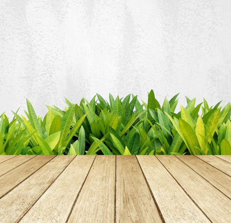 Ξύλο προοπτικής πέρα από τα πράσινα φύλλα δέντρων πέρα από το άσπρο υπόβαθρο τοίχων τσιμέντου στοκ εικόνες