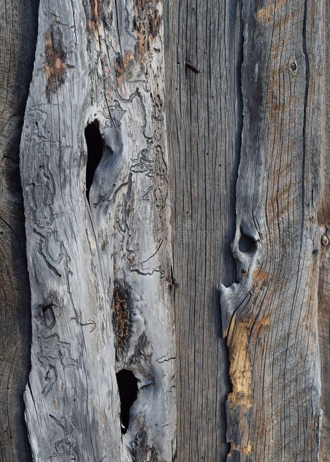 Ξύλο 1 σκουληκιών στοκ εικόνες