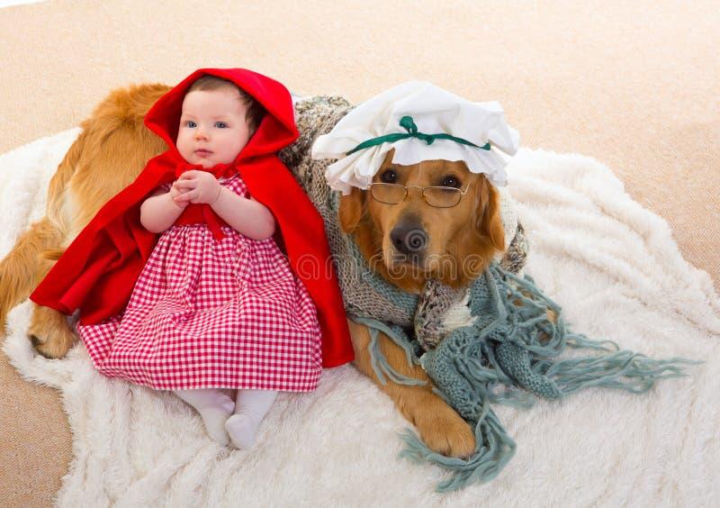 Οδηγώντας κουκούλα Little Red μωρών με το σκυλί λύκων ως grandma στοκ εικόνες
