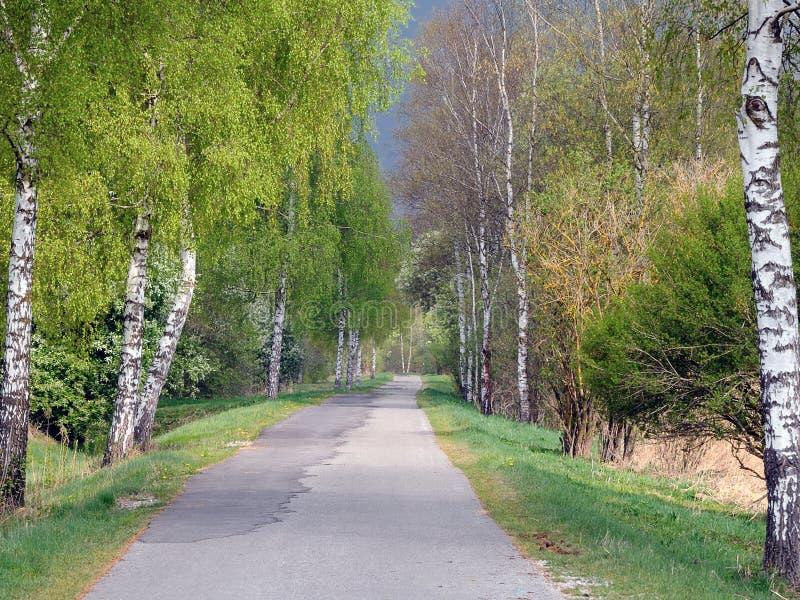 οδικά δέντρα επένδυσης ση&m στοκ φωτογραφία με δικαίωμα ελεύθερης χρήσης