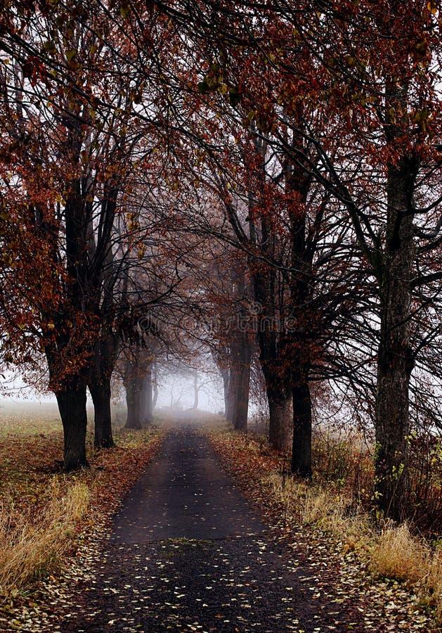 οδικά δέντρα φθινοπώρου στοκ εικόνα με δικαίωμα ελεύθερης χρήσης