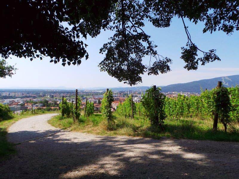 Οδική πανοραμική άποψη Piramida λόφων της Σλοβενίας Maribor wineyard στοκ εικόνα
