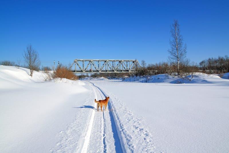 οδικός χειμώνας σκυλιών στοκ εικόνα