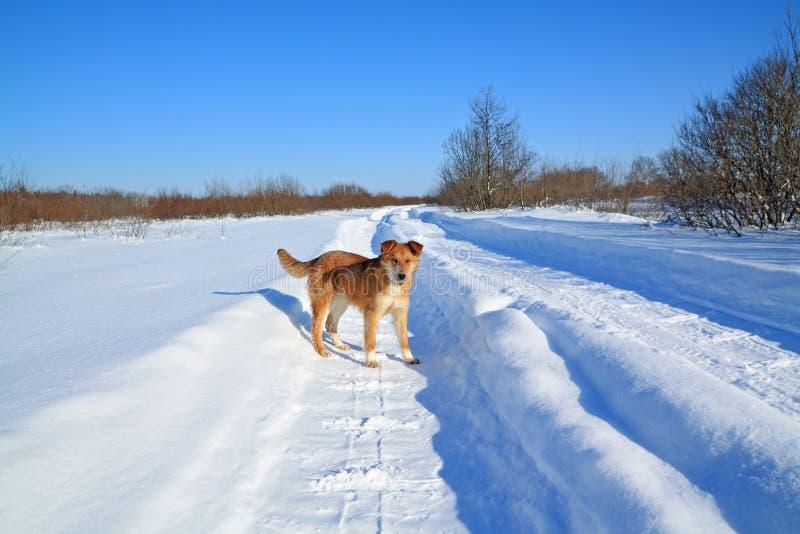 οδικός χειμώνας σκυλιών στοκ εικόνες