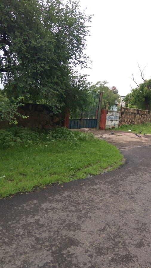 Οδικός peacock κήπος εγκαταστάσεων στοκ εικόνες