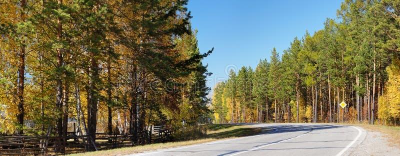 οδικό δάσος φθινοπώρου στοκ εικόνα με δικαίωμα ελεύθερης χρήσης