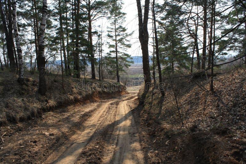 οδικό δάσος στοκ εικόνα