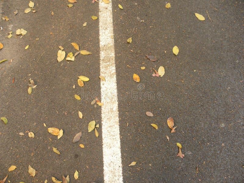 Οδικό κατασκευασμένο υπόβαθρο ασφάλτου με την άσπρη γραμμή και τα πεσμένα ξηρά φύλλα στοκ φωτογραφία με δικαίωμα ελεύθερης χρήσης