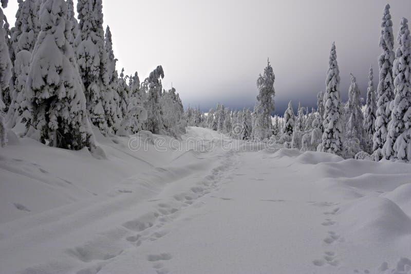 οδικό χιόνι στοκ φωτογραφία