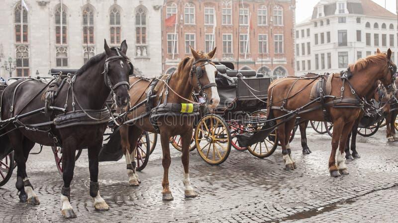 Οδοί της Μπρυζ, Βέλγιο, Ευρώπη - άλογα στοκ φωτογραφία με δικαίωμα ελεύθερης χρήσης