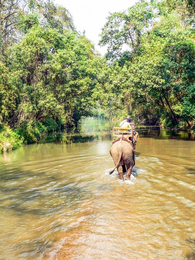 Οδοιπορία ελεφάντων τουριστών στοκ εικόνα