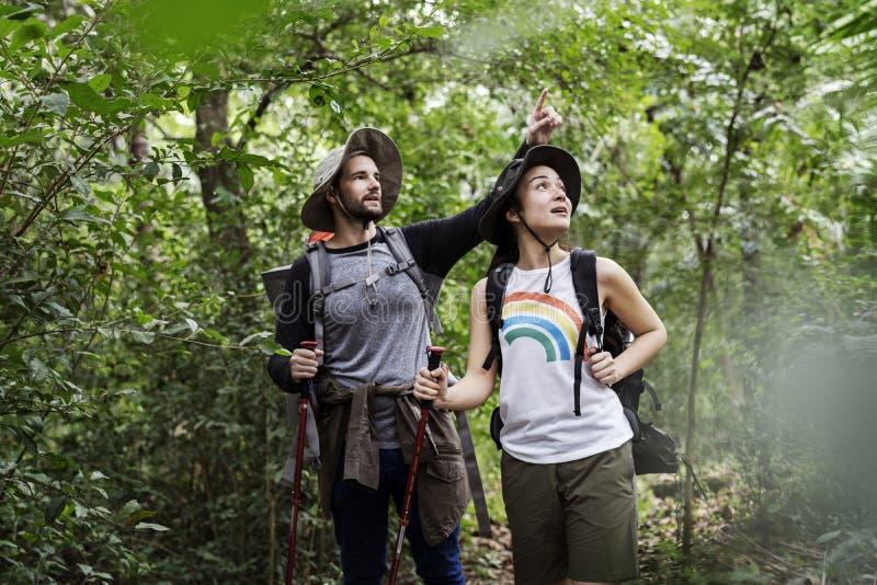 Οδοιπορία ζεύγους σε ένα δάσος από κοινού στοκ εικόνες
