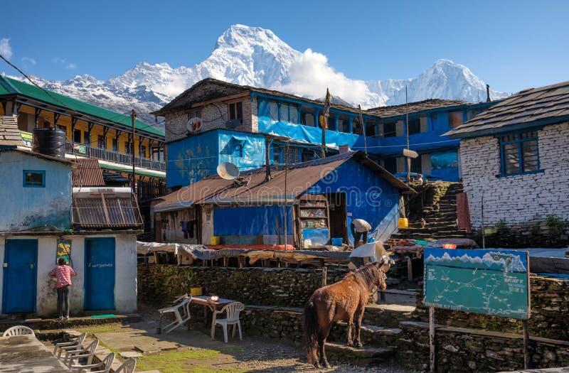 Οδοιπορικό κυκλωμάτων Annapurna Tadapani στοκ εικόνες