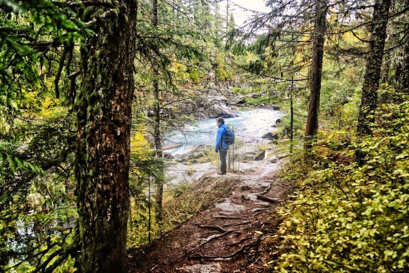Οδοιπόρος ποταμών του Καναδά συριστήρων στοκ εικόνες