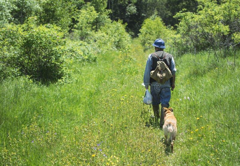 Οδοιπόρος που περπατά με τα σκυλιά στο δάσος βουνών στοκ εικόνες