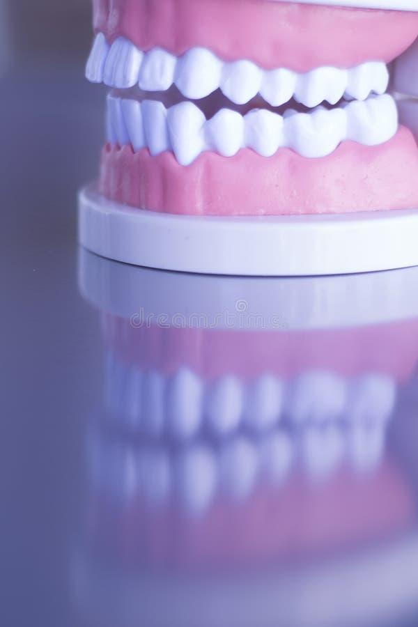 Οδοντικό πρότυπο δοντιών Dentsts στοκ εικόνες