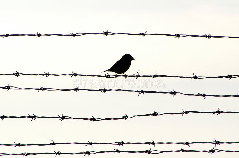 οδοντωτό καλώδιο πουλι στοκ φωτογραφίες με δικαίωμα ελεύθερης χρήσης
