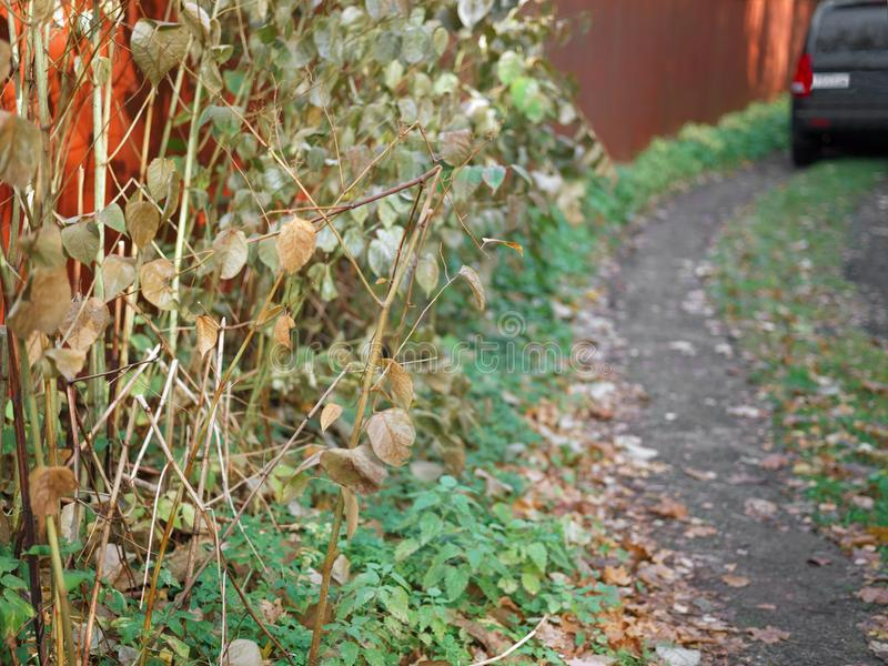 Οδός το φθινόπωρο στοκ εικόνα με δικαίωμα ελεύθερης χρήσης