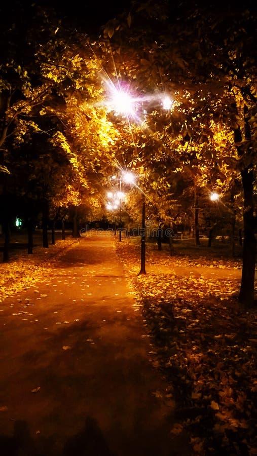 Οδός φθινοπώρου τη νύχτα στοκ φωτογραφία με δικαίωμα ελεύθερης χρήσης