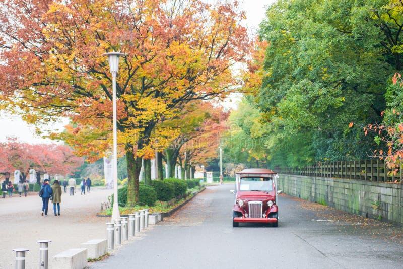 Οζάκα, Ιαπωνία - 20 Νοεμβρίου 2017: Αλλαγή χρώματος φύλλων το φθινόπωρο στοκ εικόνες