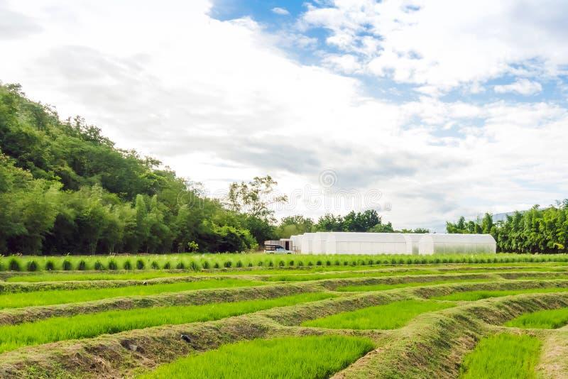 Οικία Θερμοκήπιο ή σήραγγα για νέα φυτά που καλλιεργούν φυτώρια στοκ εικόνες με δικαίωμα ελεύθερης χρήσης