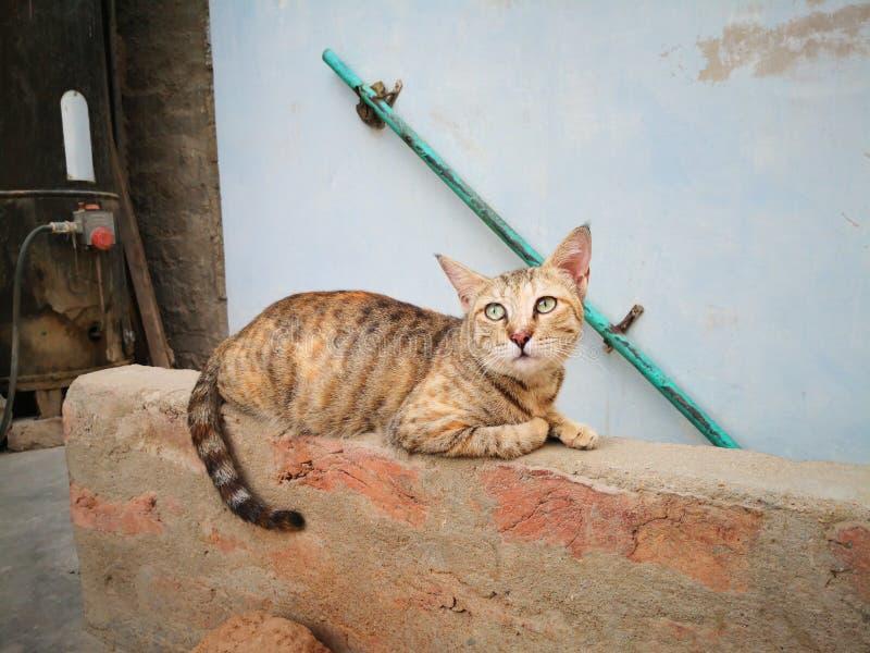Οικογένεια γατών στο σπίτι Διαφορετικοί τύποι γατών που ζουν εδώ στοκ εικόνα