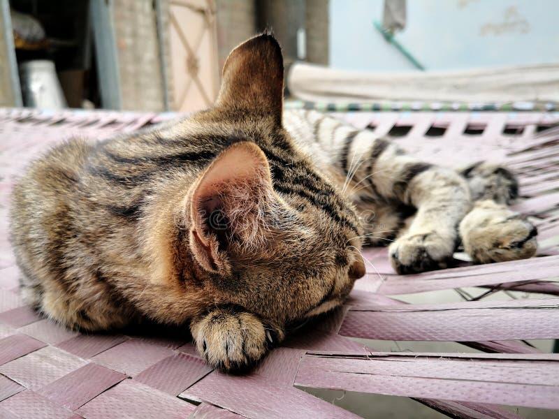 Οικογένεια γατών στο σπίτι Διαφορετικοί τύποι γατών που ζουν εδώ στοκ φωτογραφία