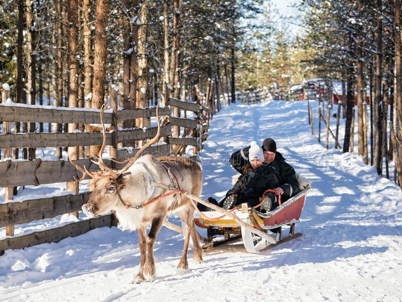 Οικογένεια ενώ γύρος ελκήθρων ταράνδων στο χειμώνα Ροβανιέμι βόρεια Φινλανδία στοκ εικόνες