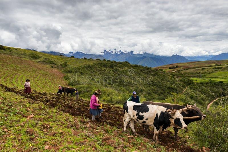 Οικογένεια που οργώνει το έδαφος κοντά στο χωριό Maras, Περού στοκ εικόνα