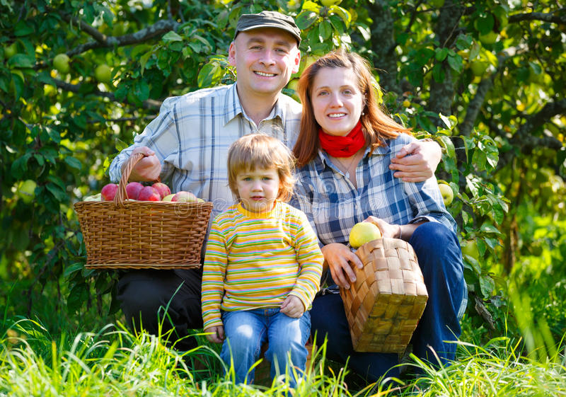 Οικογένεια στα μήλα συγκομιδών στοκ εικόνα