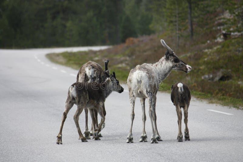 Οικογένεια ταράνδων στοκ φωτογραφία με δικαίωμα ελεύθερης χρήσης