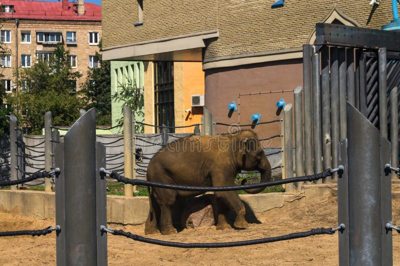Οικογένεια των ελεφάντων στο ζωολογικό κήπο της Μόσχας στοκ φωτογραφία με δικαίωμα ελεύθερης χρήσης