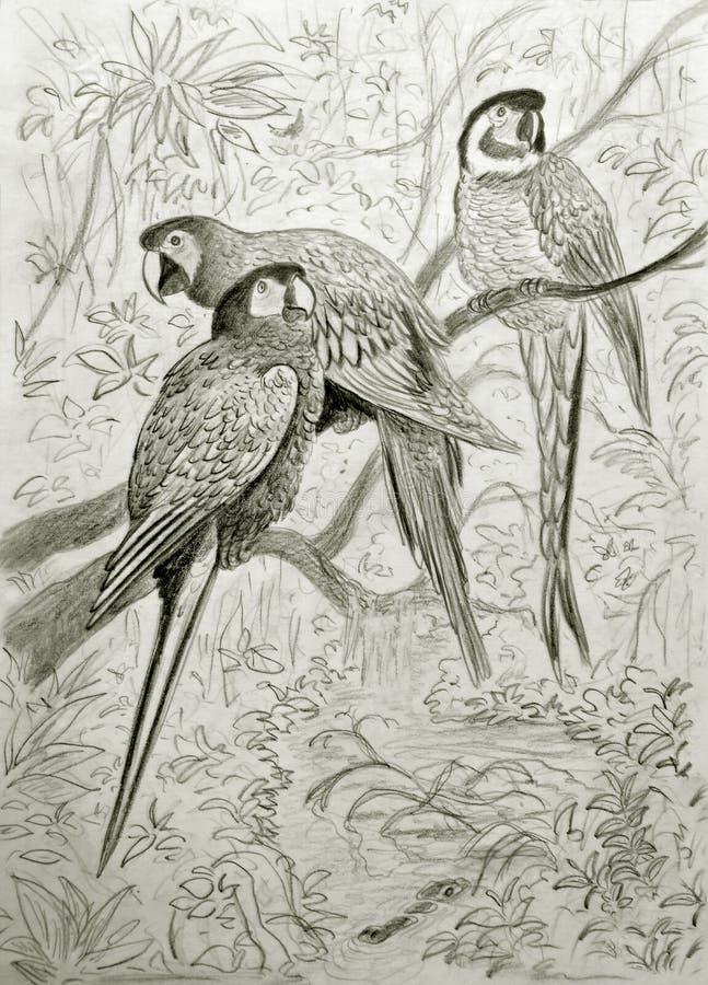 Οικογένεια των παπαγάλων διανυσματική απεικόνιση