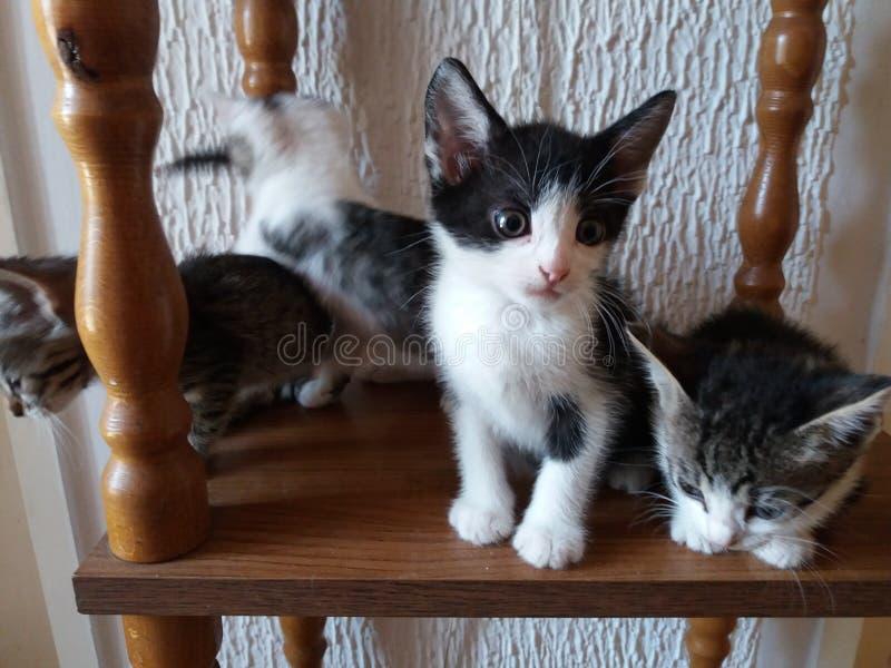 Οικογενειακή γάτα στο χωριό στοκ φωτογραφίες