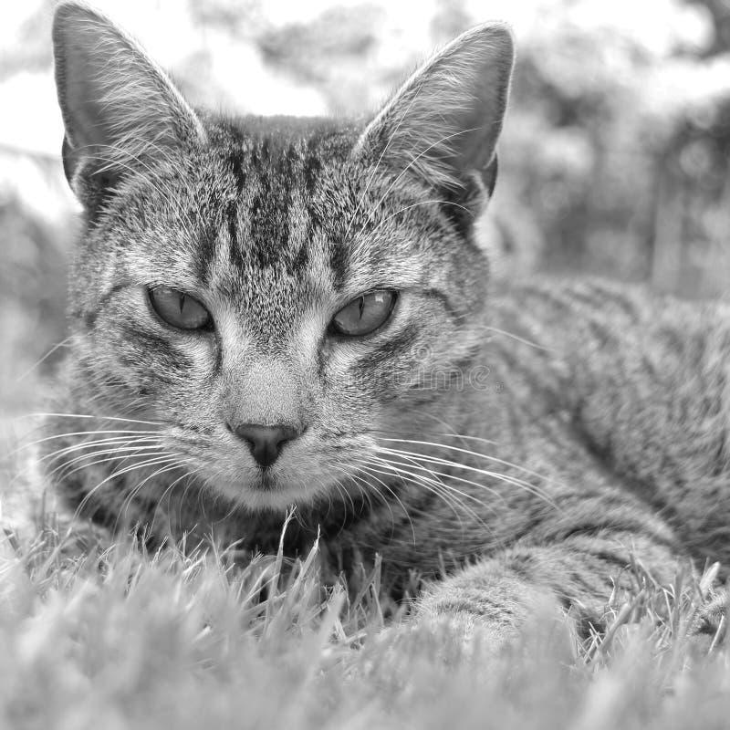 Οικογενειακή γάτα στοκ φωτογραφία με δικαίωμα ελεύθερης χρήσης