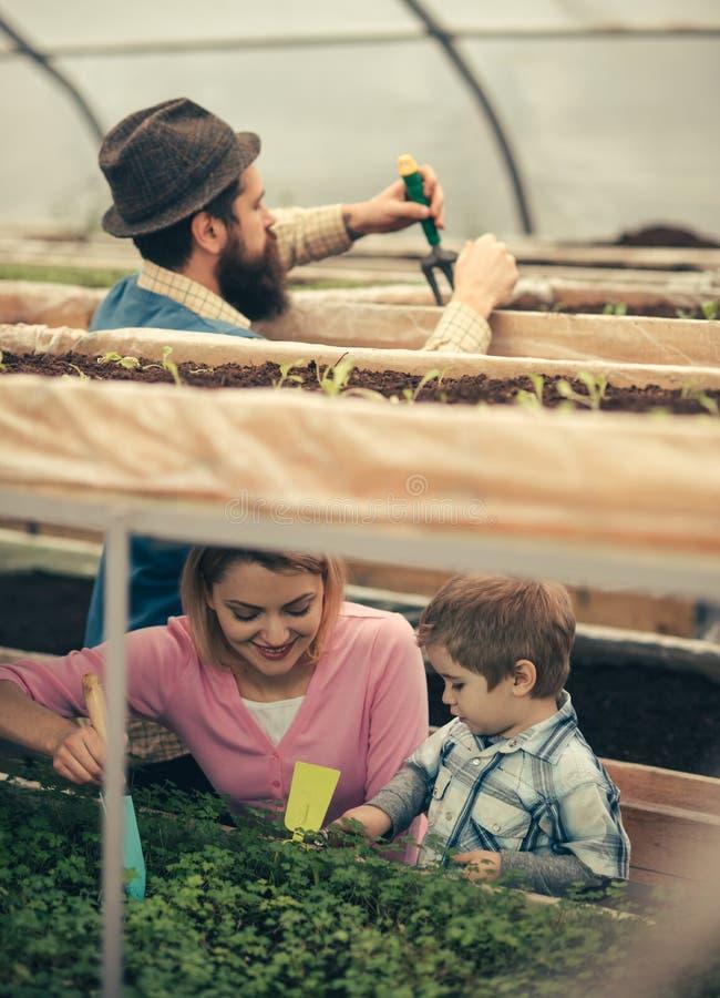 Οικογενειακή επιχείρηση οικογενειακή επιχείρηση στη βιομηχανία γεωργίας η ευτυχής οικογένεια έχει την επιχείρηση στο θερμοκήπιο Ο στοκ φωτογραφίες