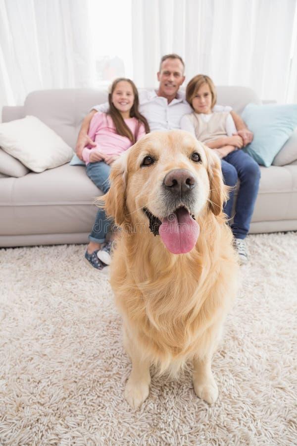 Οικογενειακή συνεδρίαση στον καναπέ με χρυσό retriever στο πρώτο πλάνο στοκ εικόνα